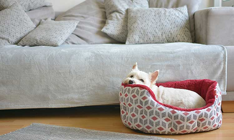 Pet Beds and Bowls
